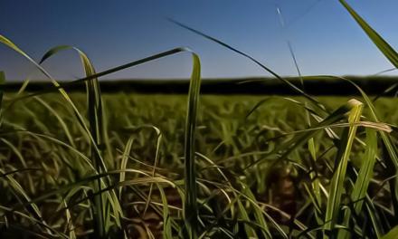 Programa inédito na cadeia de cana-de-açúcar promove sustentabilidade entre produtores