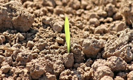 Com Programa Cultivar, Raízen contribui para geração de valor ao agronegócio brasileiro