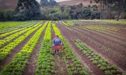 Dia do Agricultor: 6 inovações da Secretaria de Agricultura e Abastecimento para facilitar as atividades deste profissional