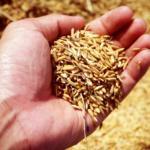 Plano Safra 2020/2021: Secretaria de Agricultura e Abastecimento participa de divulgação em âmbito estadual