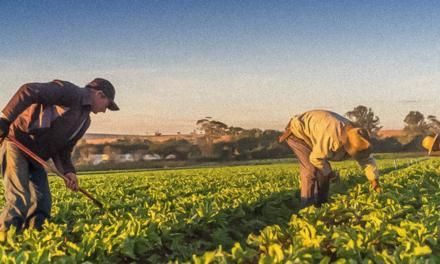 Sítio A Boa Terra apoia projeto de doação de cestas orgânicas
