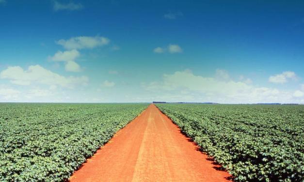SLC Agrícola investe em pesquisas dentro das Fazendas para promover melhorias produtivas