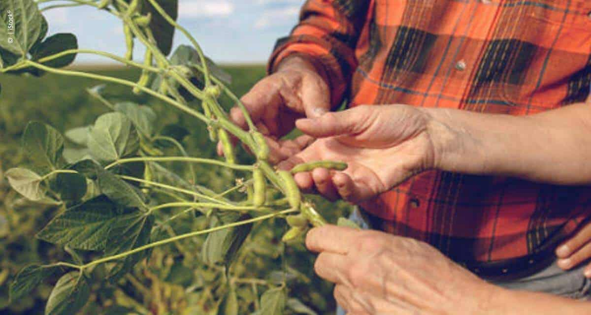 Desafio de Máxima Produtividade de Soja ganha novo indicador de ecoeficiência