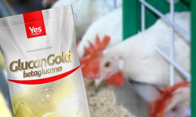 Uso de imunomodulares aumenta eficiência, segurança e rentabilidade na produção avícola