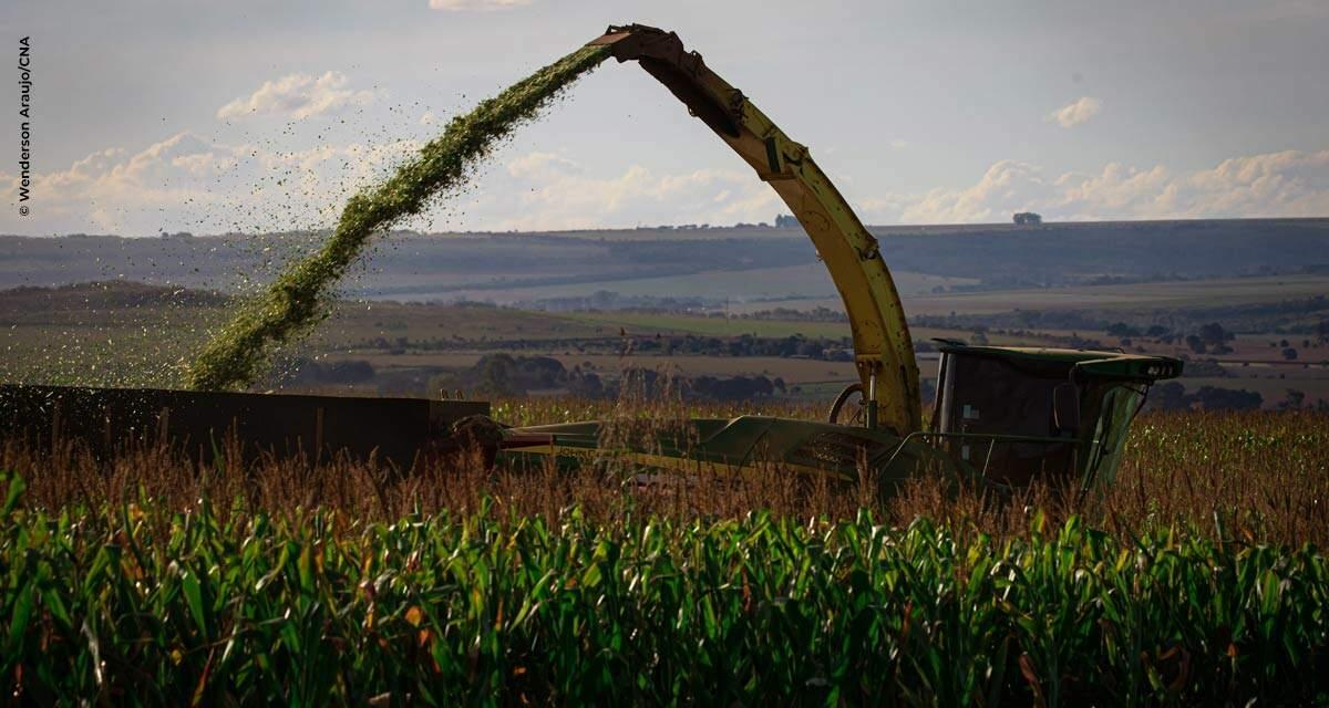 Oportunidades em alta, produtor foca na colheita do milho safrinha, mirando a safra verão