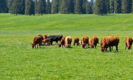 Programa Mais Pasto: A pecuária do futuro começa agora!