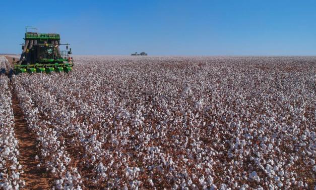 Controle da produção e das vendas de algodão na palma da mão