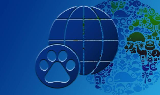 Setor pet deve concluir 2020 superando US$ 300 milhões em valor exportado. Crescimento supera 40% nos últimos três anos.