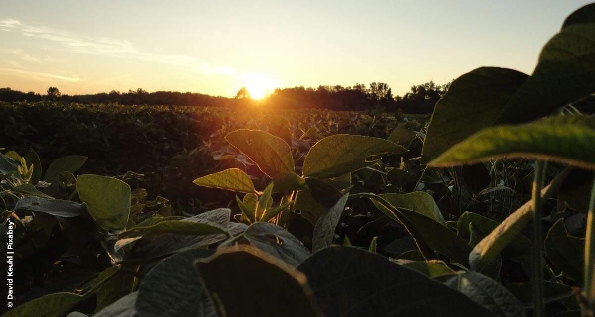 Sicredi registra crescimento de 60% em seguros agrícolas e reforça gestão de risco no agronegócio