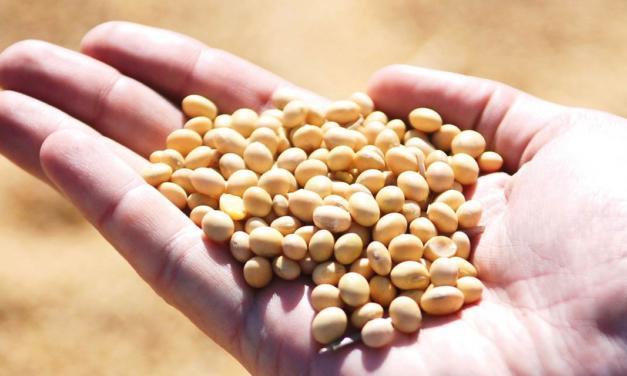 SLC Sementes lança portal para rastreio e gestão de qualidade de sementes