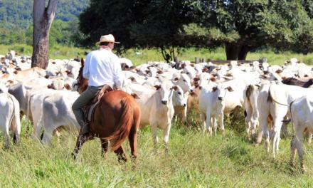 Vetoquinol Saúde Animal alerta produtores sobre doenças respiratórias em bovinos