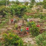 Agrofloresta diversifica produção e gera mais renda para a Agricultura Familiar