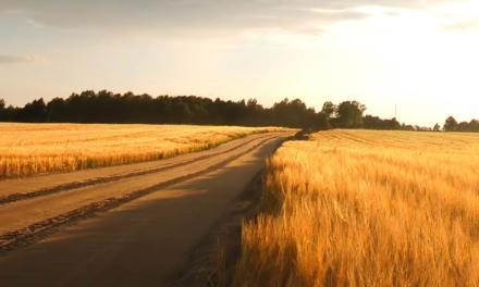 Área de grãos na safra 2020/21 pode encostar em 70 milhões de hectares