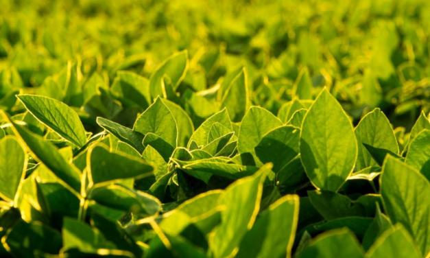 Agricultores têm opções eficientes para o controle de plantas daninhas resistentes nas lavouras