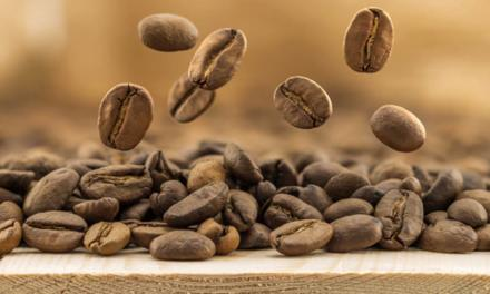 Exportações de café do Brasil atingem 3,3 milhões de sacas em agosto