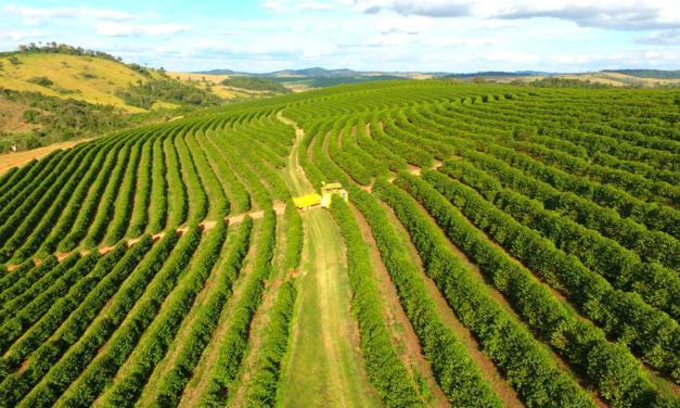 Fórum online da Cooxupé debaterá os impactos das condições climáticas na safra 2020-2021 do café