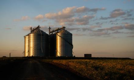 Certificação de armazéns evita perdas de grãos e agrega valor à produção agrícola