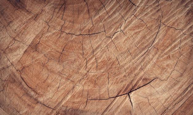 Na Semana da Amazônia, Imaflora lança publicação sobre o mercado madeireiro