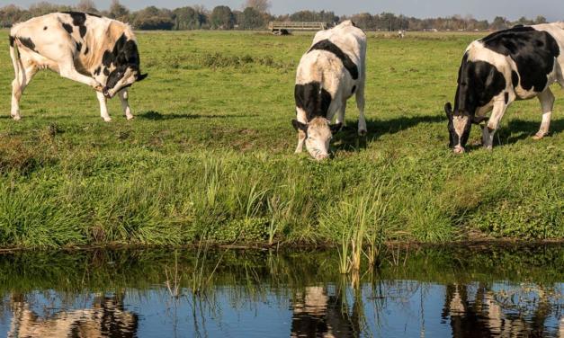 MSD Saúde Animal amplia portfólio de produtos para a pecuária