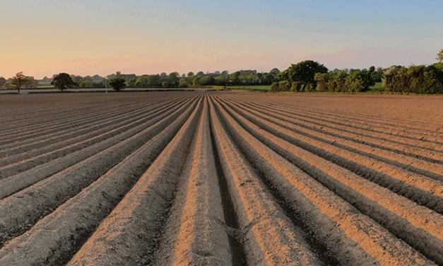 Novo fundo internacional financiará fazendas conforme índices certificados de sustentabilidade
