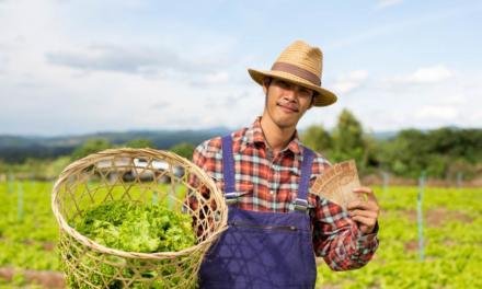A reforma tributária e os impactos na agricultura familiar