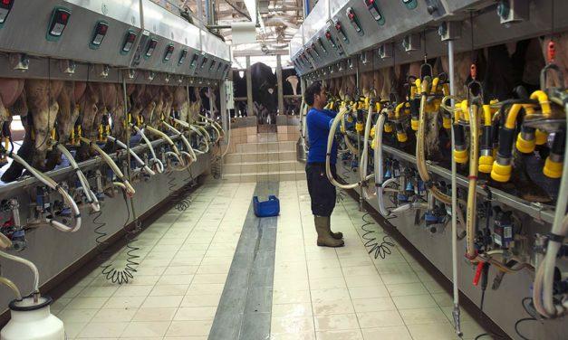 Pecuária leiteira: 6 motivos para investir em automação de alta tecnologia para a sala de ordenha