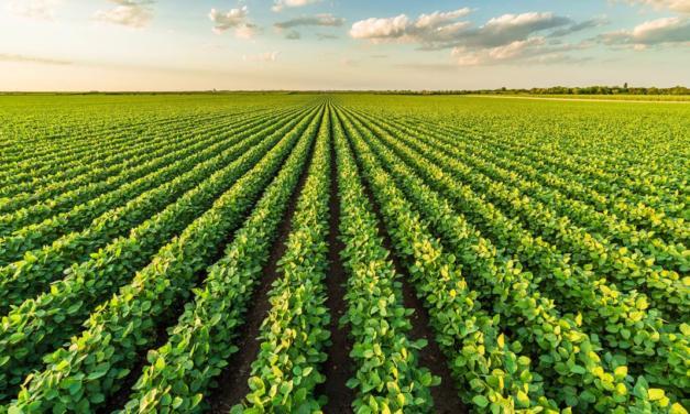 Soluções para manejo seguro de plantas daninhas na cultura da soja