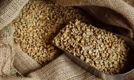 Brasil bate recorde histórico para o mês com exportação de 3,8 milhões de sacas de café em setembro