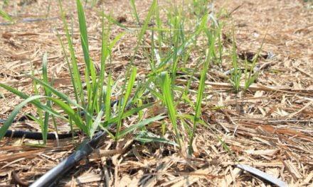 Irrigação por gotejamento ajuda a reduzir custo de arrendamento