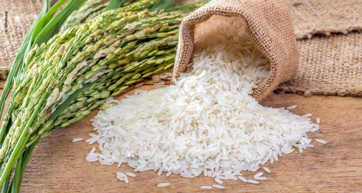 Sem cuidados, arroz custaria muito mais caro com a queda de produção