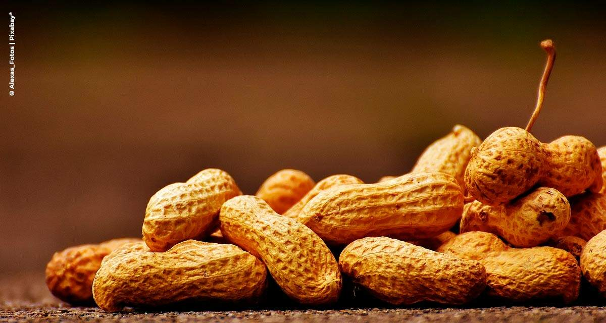 Setor de amendoim in natura tem balança comercial positiva no acumulado até setembro