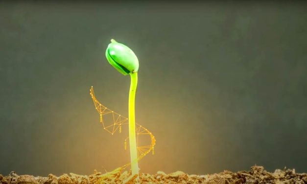 Bayer lança as primeiras variedades de soja com a tecnologia Intacta 2 Xtend®