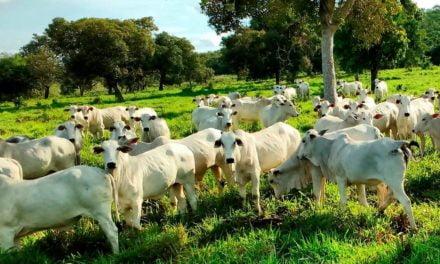 Controle das verminoses em bovinos exige um calendário sanitário, estratégico, eficiente e racional