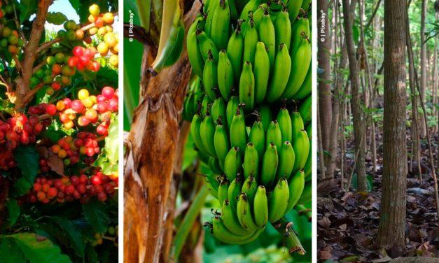 Agronegócio: Como ser dono de uma fazenda multicultura em meio a pandemia?