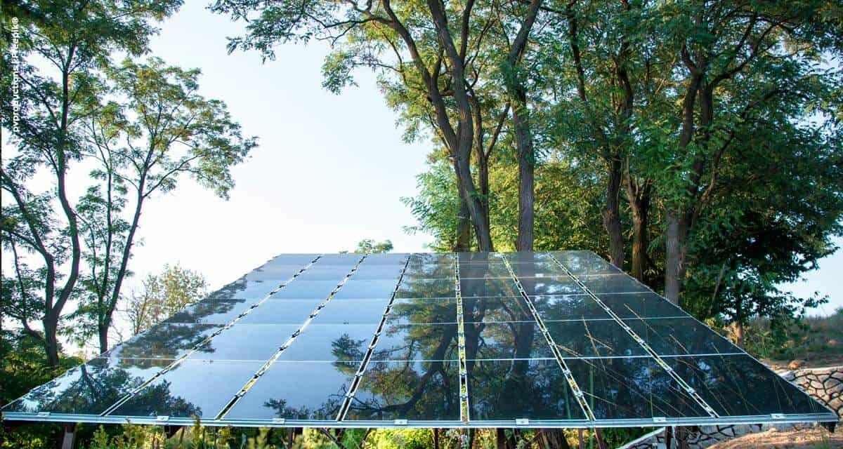 Pequenos empresários do agronegócio economizam até 90% com energia após instalação de sistemas fotovoltaicos