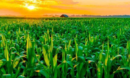 Distribuidores do agronegócio recorrem à antecipação de recebíveis para garantir as vendas para a Safrinha 2021