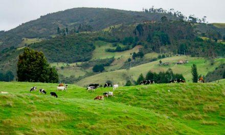 DSM faz retrospectiva da pecuária de corte e leite e anuncia projeções para 2021
