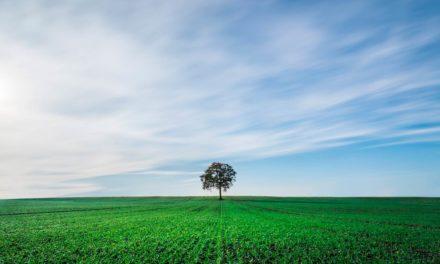 Bionat Agro conquista a ISO 14001:2015