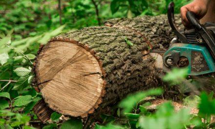 Certificações de pequenos produtores de madeira aumentam mais de seis vezes em 10 anos