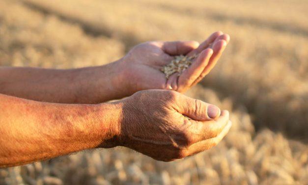 Falta de chuva no Sul reduz a estimativa de produção de grãos