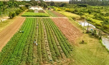 Mercado de produtos orgânicos: 2021 permanece aquecido
