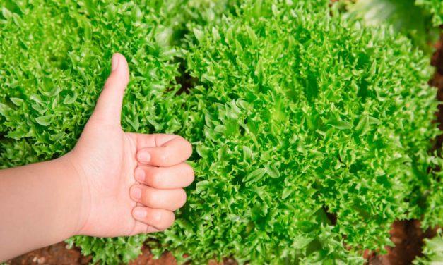 Empresa alemã apoia Programa de Sustentabilidade no Acre