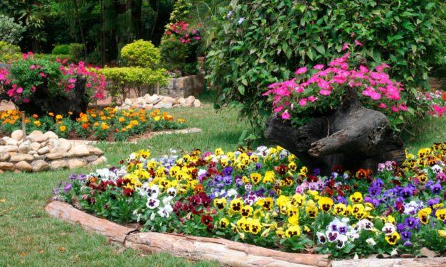 """Cultivar flores comestíveis em casa une beleza, gastronomia e """"plantoterapia"""""""