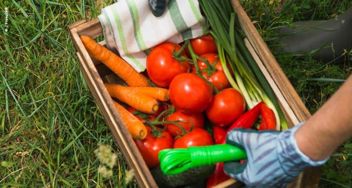 Fertilizantes com aminoácidos otimizam o período de produção