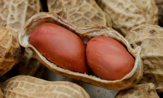 Programa Pró-Amendoim celebra 20 anos de atuação no mercado brasileiro