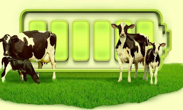 DRENCH UP, o novo suplemento nutricional da Auster para pós-parto seguro das vacas leiteiras