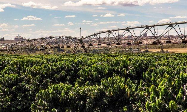 Com projeto de irrigação, cafeicultor aumenta produtividade em 28%