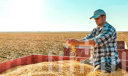 Relançamento da marca de sementes NK completa um ano com novas tecnologias e ferramentas digitais