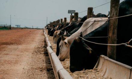 Com apoio da UPL, Confina Brasil mapeia 1,5 milhão de bovinos confinados em cinco estados