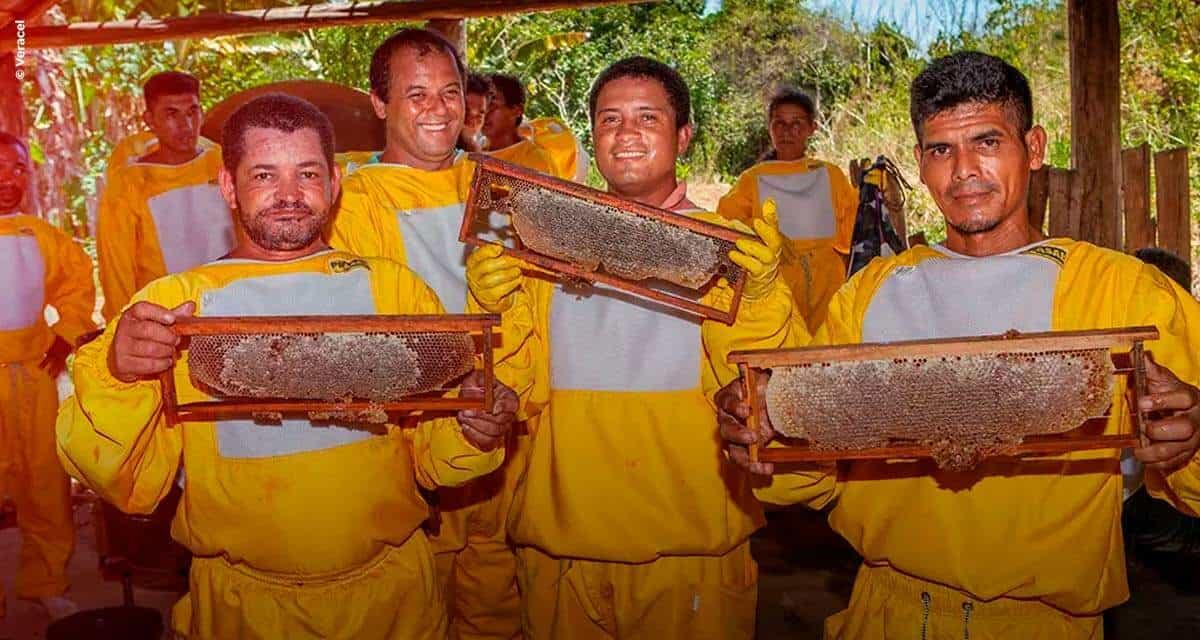 Veracel Celulose promove projeto de meliponicultura com comunidades no Sul da Bahia